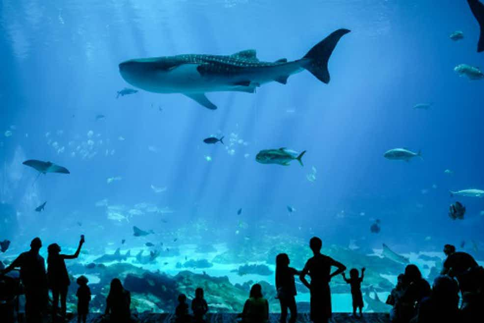 Tickets For Georgia Aquarium Atlanta