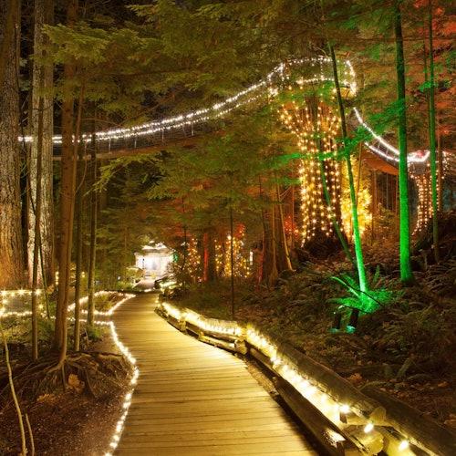 Puente colgante de Capilano + Tour de Vancouver