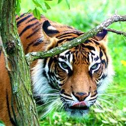 Imagen Zoo de Londres