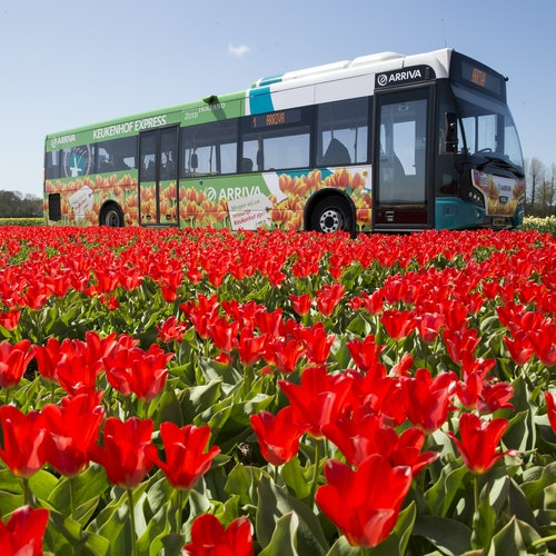 Keukenhof: Entrada + Transporte desde Haarlem
