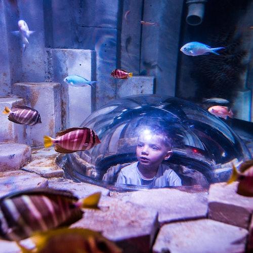 SEA LIFE Sídney: Sin colas