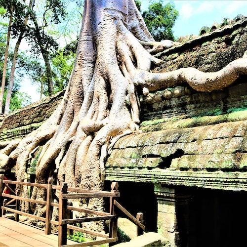 Angkor Wat: Visita guiada al amanecer