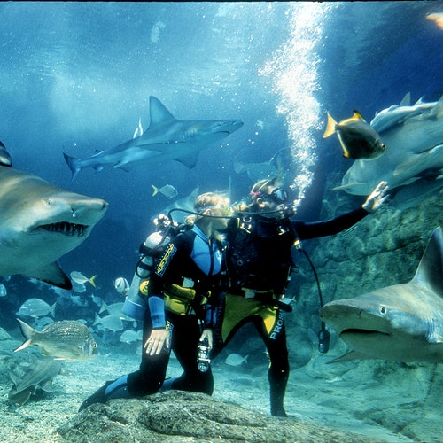 Shark Dive Xtreme en Sea Life Melbourne