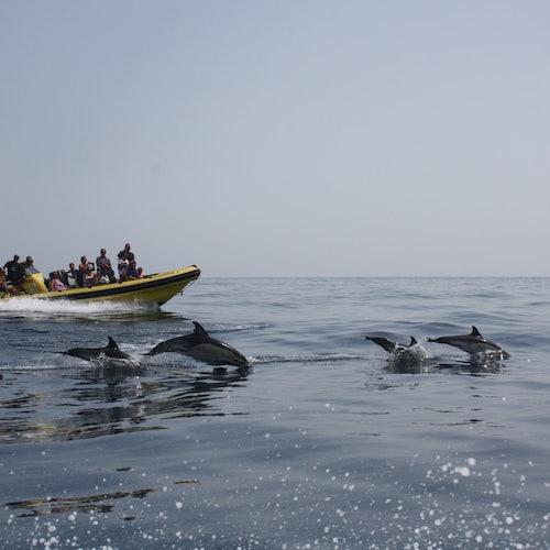 Excursión de cuevas y observación de delfines desde Albufeira en Insónia