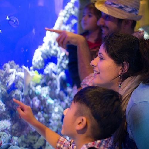 Burj Khalifa: Floors 124 & 125 + Dubai Aquarium