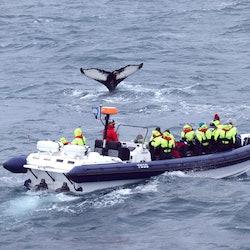 Whale Watching: RIB Express from Reykjavik