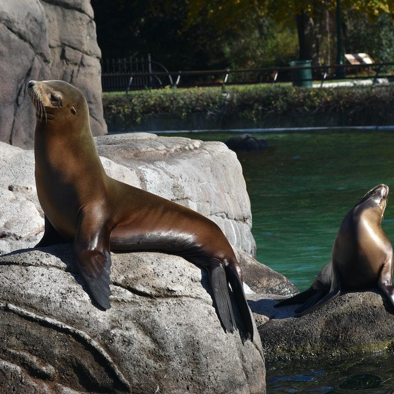 Billets pour Bronx Zoo