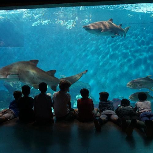 Seville Aquarium