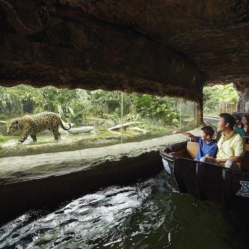 Zoo de Singapur y River Safari: Ticket combinado + Trasporte de ida y vuelta