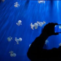 Aquarium of Genoa: Skip The Line