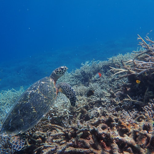 Tour de la isla de Barras: SUP de manglares / canoa y esnórquel