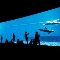 Tickets, museos, atracciones,Acuario de Génova