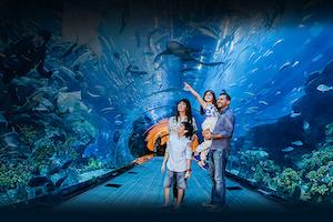 Aquarium & Unterwasserzoo Dubai