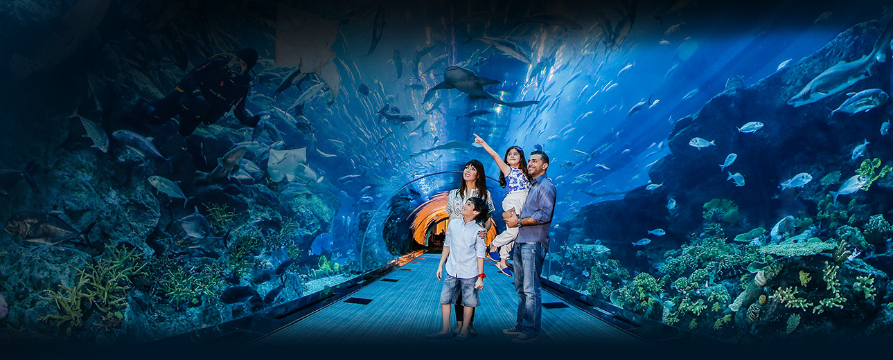 Dubai aquarium underwater zoo view the king croc for Best time to fish tomorrow