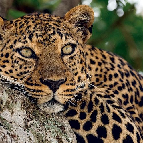 Zoo Aquarium de Madrid: Sin colas