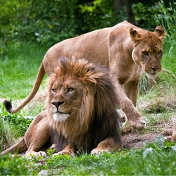 Imagen Zoológico del Bronx