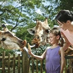 Tickets, museos, atracciones,Zoológico de Singapur,Safari