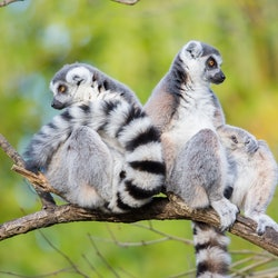Tickets, museos, atracciones,Woodland Park Zoo