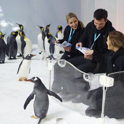Experiencia Penguin Passport en SEA LIFE Melbourne