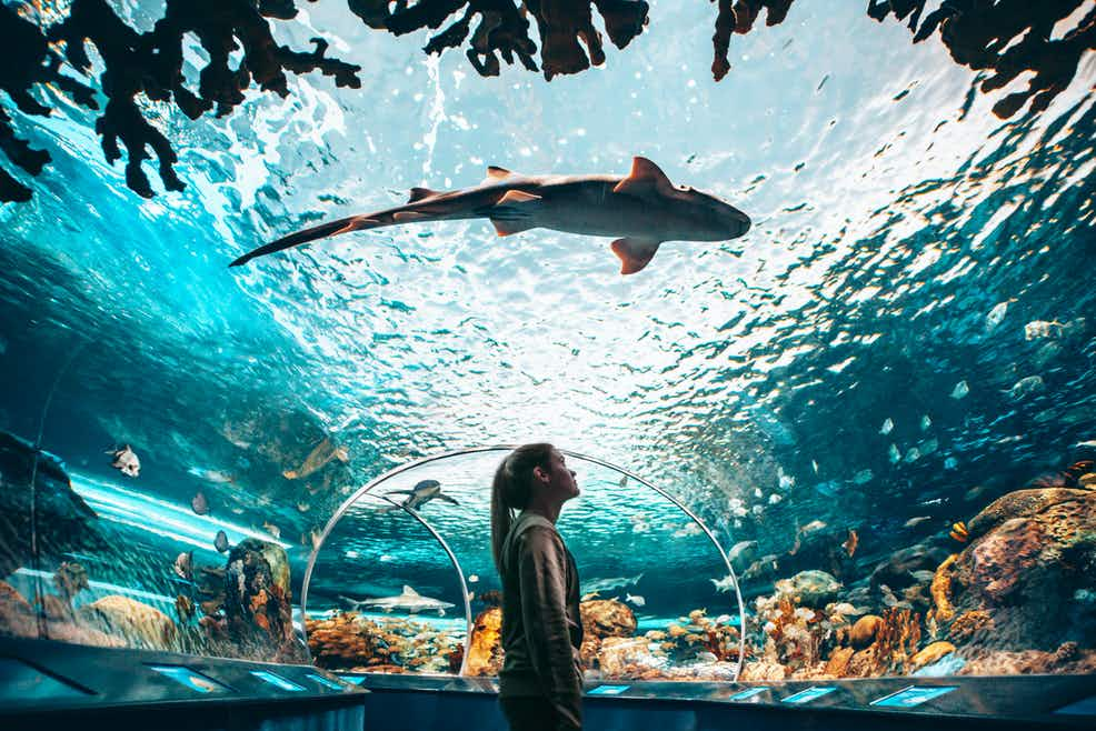 Ripley's Aquarium of Canada: Sharks After Dark | Tiqets