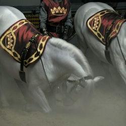 Medieval Times Florida