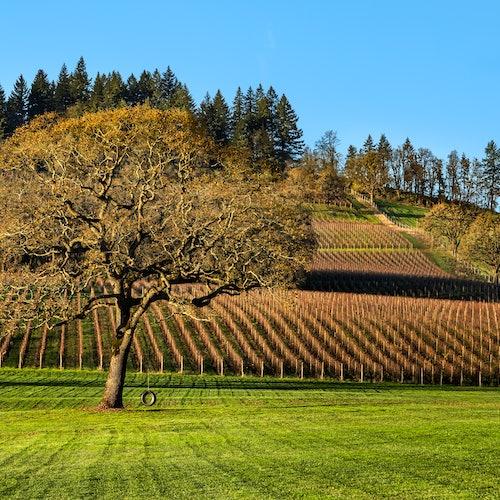 Valle de Willamette: excursión de un día con todo incluido desde Portland