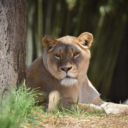 Maryland Zoo: Skip The Line