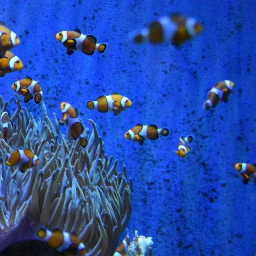 Aquarium de Barcelona: Sin colas