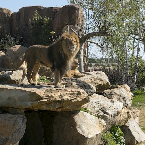 ZooParc de Beauval