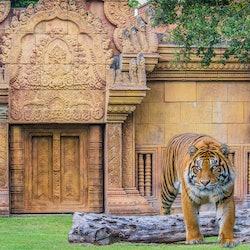 Tickets, museos, atracciones,Zoo de Miami