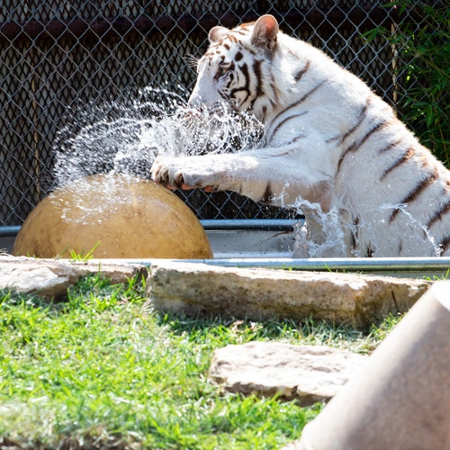 Zoo de Austin