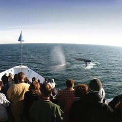 San Diego Whale & Dolphin Watching Adventure
