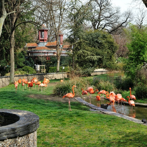 Ménagerie, Zoo of the Jardin des Plantes: Skip The Line
