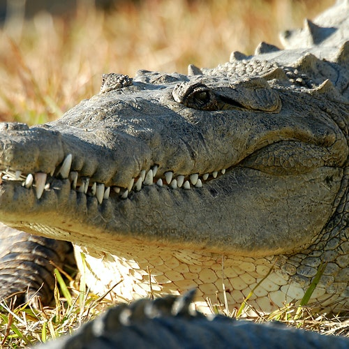 Admisión general a Gatorland Orlando: Acceso rápido