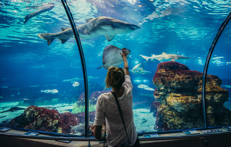 Tickets for barcelona aquarium tiqets for Aquarium de barcelona