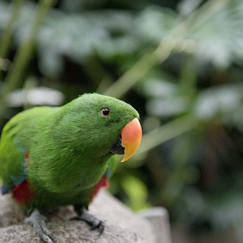 Jardines de mariposas de Victoria: Sin colas