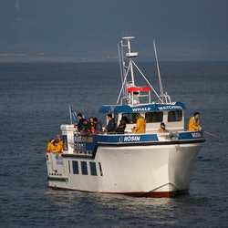 Sea Fishing Boat Trip from Reykjavik