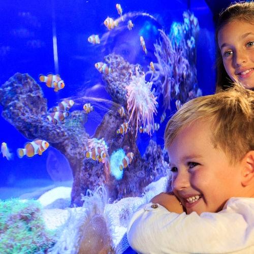 Palma Aquarium y AquaDome opcional: Sin colas
