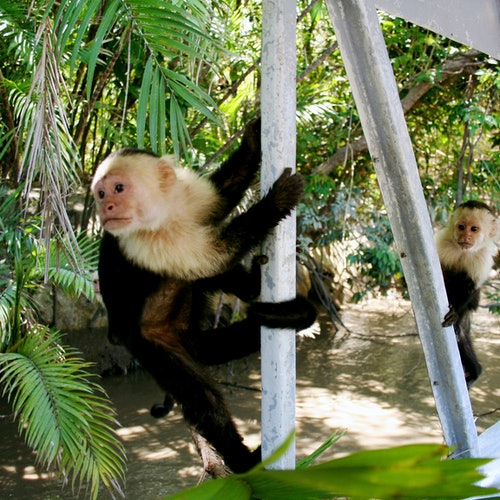 Parque nacional Palo Verde: Crucero por la jungla