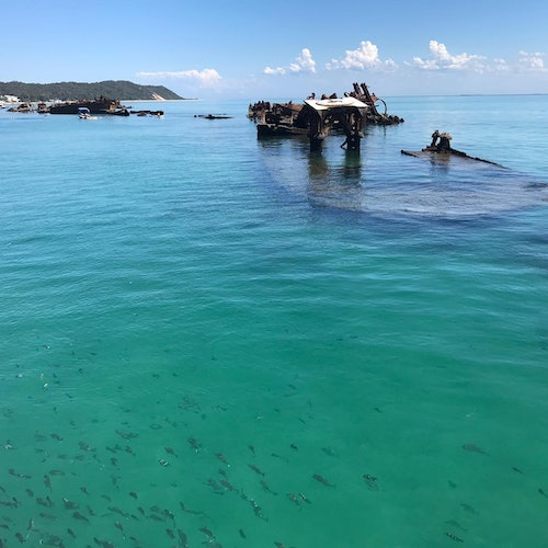 Tangalooma Wrecks & Dolphin Cruise from Brisbane