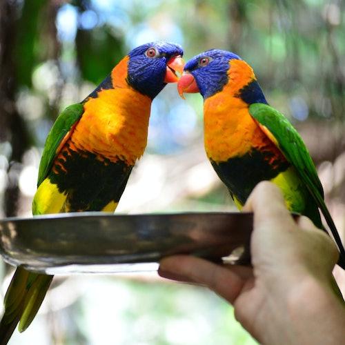 Cairns Wildlife Parks: Paquete de 4 parques