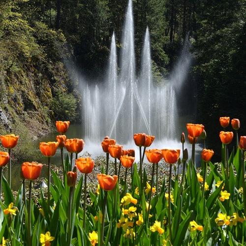 Butchart Gardens: Roundtrip from Victoria