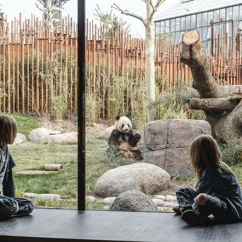 Zoo de Copenhague: Sin colas