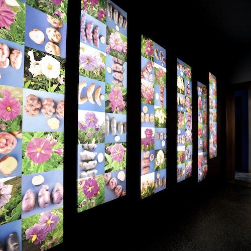 Museo de la Patata Frita Brujas