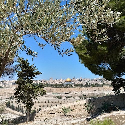 Jerusalén, Belén y el mar Muerto: Tour desde Jerusalén