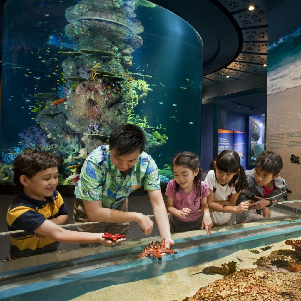 Tickets for S.E.A. Aquarium Singapore