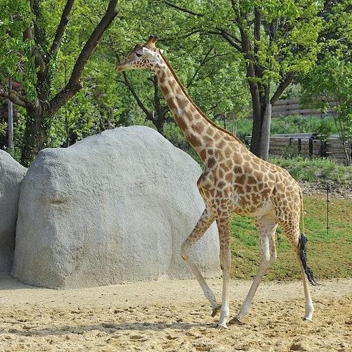 Paris Zoo (Parc Zoologique de Paris)