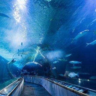 Aquarium Of The Bay San Francisco Tiqets