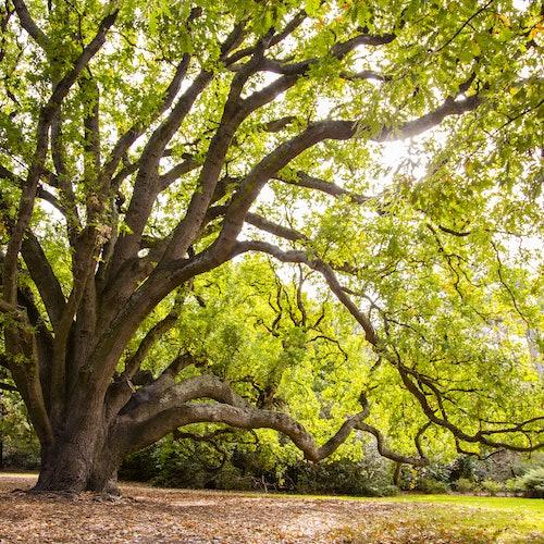 Real Jardín Botánico de Melbourne: Paseo por el patrimonio aborigen